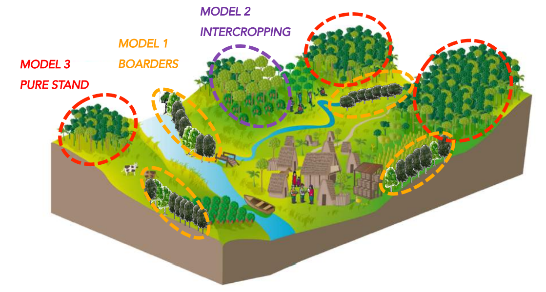 Combination of the intercropping, boarders and pure stand planting models