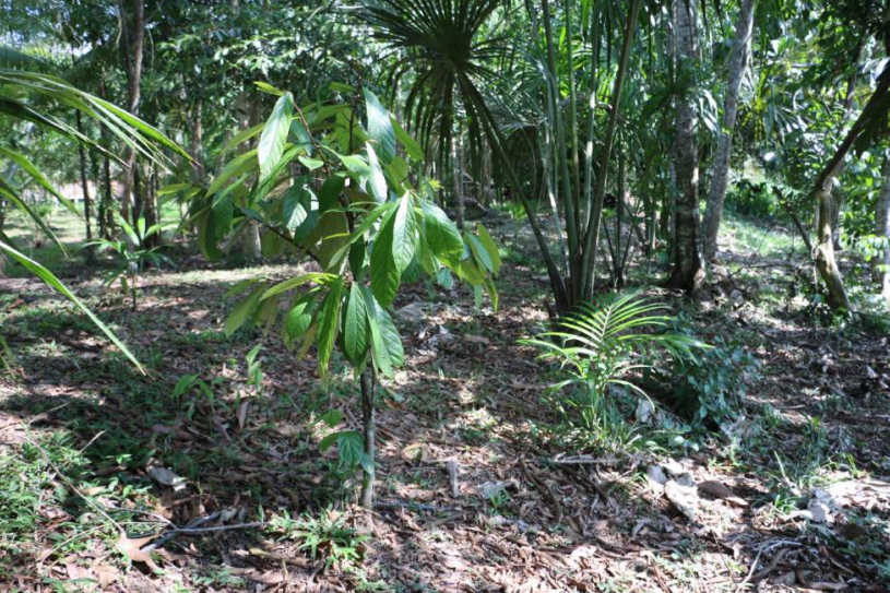 MODEL 1 - Planting fruit trees in the forest