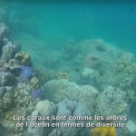 Pokmasta-Video-Coral-regeneration-emilia-d'avack