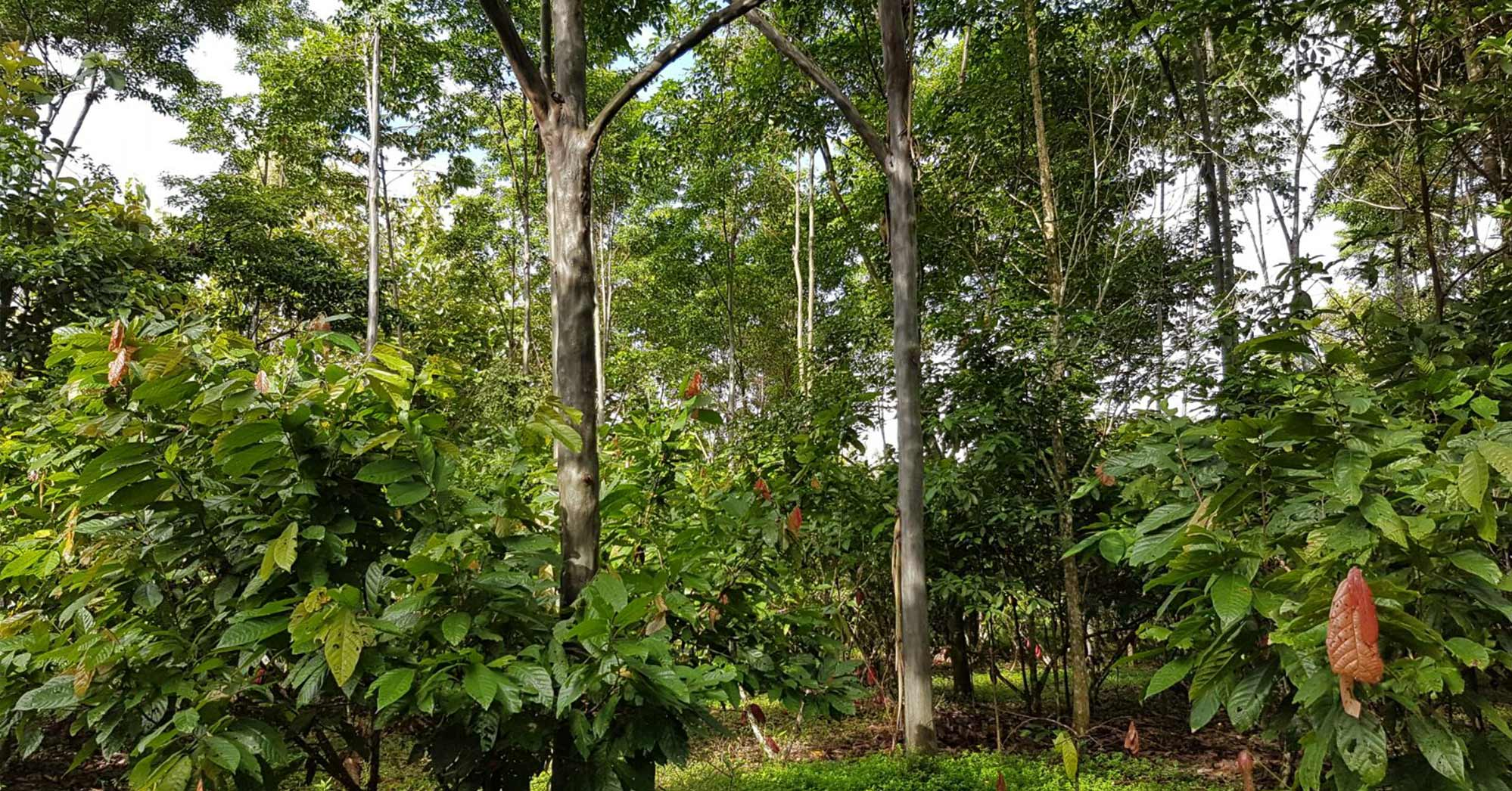 agroforestry at landscape level