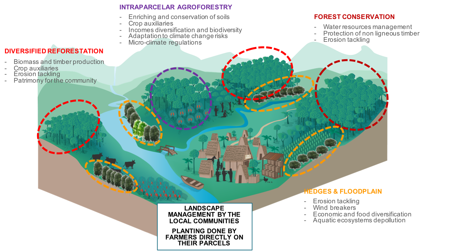 agroforestry benefits