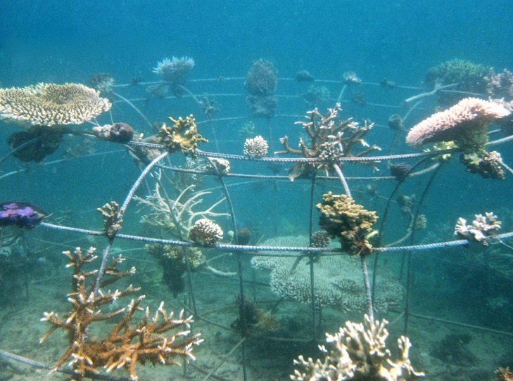 Artificial reef structure planted underwater