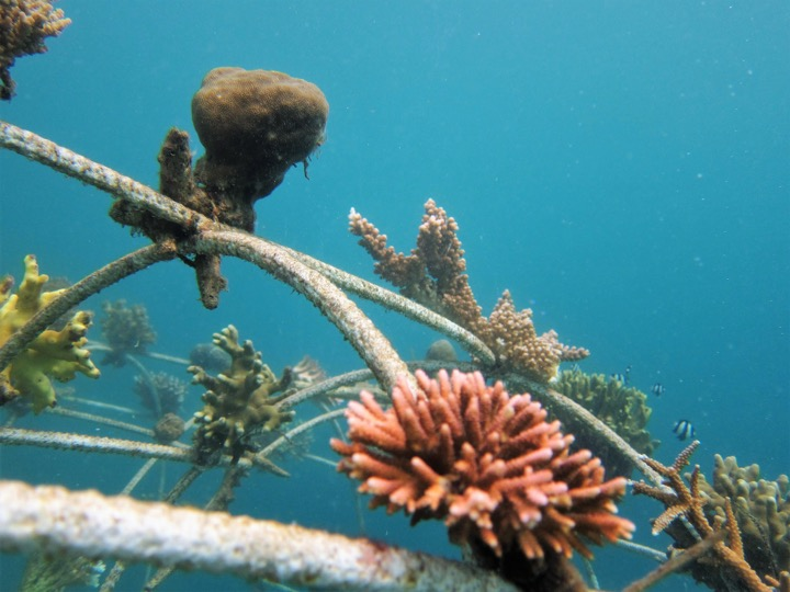 Details of artificial reef structure
