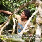 Kopi-Lestari-reforestation-indonesia-video2