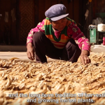 Liming-reforestation-project-china-video