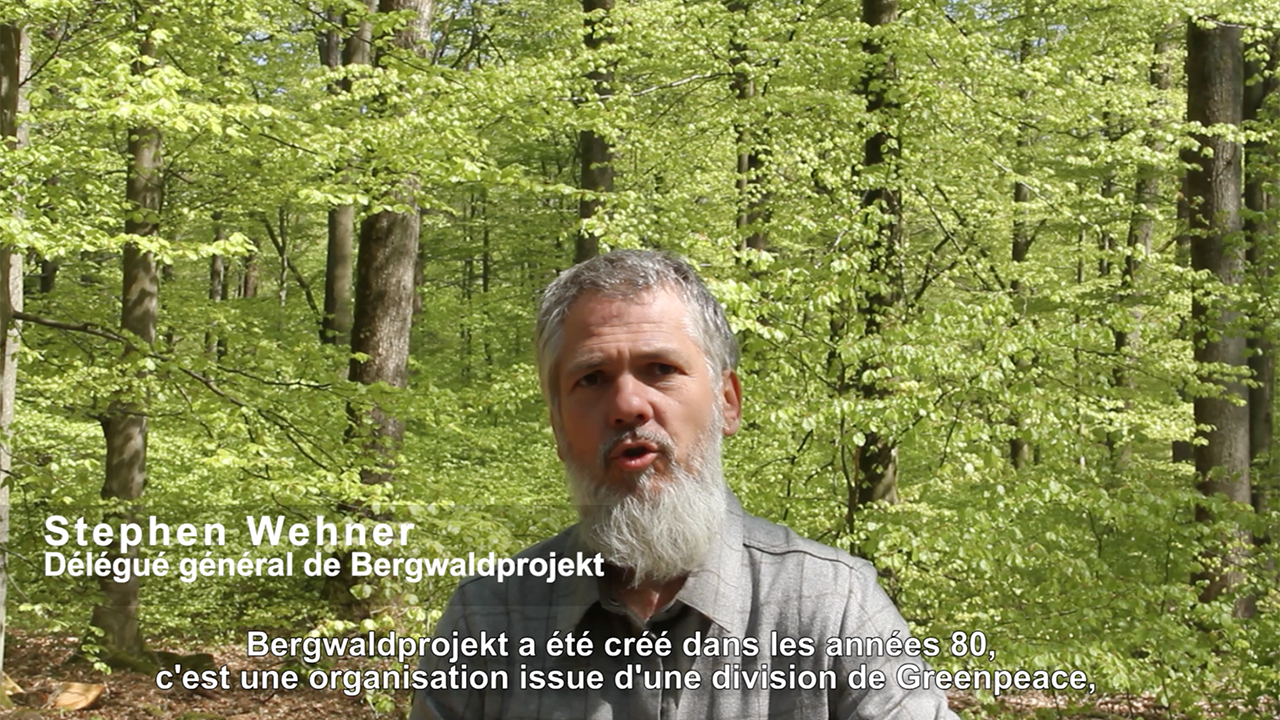 Mountain-Forests-Video-Reforestation-Germany copy
