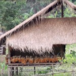 PUR-Farm-Thailand-Agroecology-video